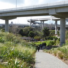 Waterview Shared Path