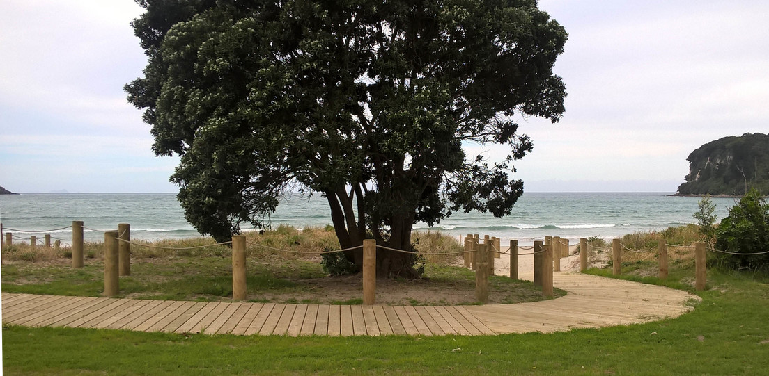 An existing pohutukawa becomes a pivot point for the boardwalk
