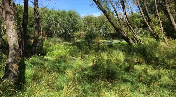 Gill Lawson says she is learning to see the colours and textures in the Canterbury wetlands.