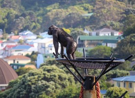 The judges felt the captive environment for the chimps at Wellington Zoo has been enhanced while educational and conservation outcomes have also been strengthened.