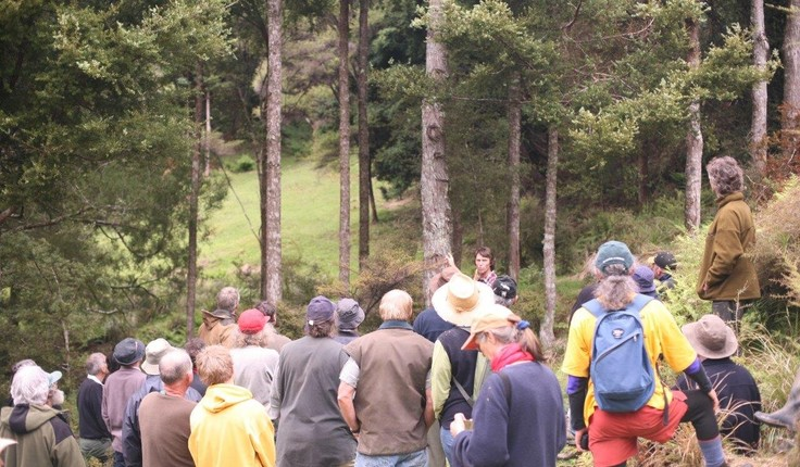 Paul Quinlan speaking at a Northland Totara Working Group field day
