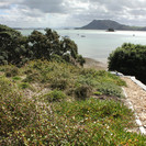 Biodiversity living roof, Whangarei - Photo by Zoë Avery